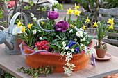 Bunt bepflanzte Frühlings-Schale im Filz-Mantel