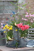 Tisch-Arrangement mit Tulpen, Narzissen und Traubenhyazinthen