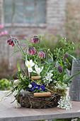 Frühlings-Korb mit Schachbrettblumen, Krokus und Michstern