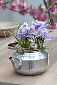 Krokus 'Striped Beauty' im silbernen Teekessel