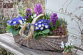 Frühlingskorb mit Hyazinthen und Primeln bepflanzt