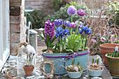 Jardiniere mit Hyazinthe, Netziris und Kugelprimeln