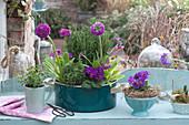 Frühlings - Arrangement mit Primeln und Kräutern