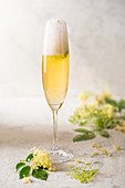 Glass of homemade elderflower champagne with fresh elderflowers