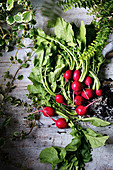 Fresh radishes on a wooden background