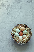 Different coloured eggs in a nest