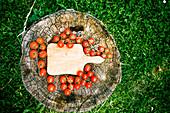 Kirschtomaten auf Baumstamm im Garten
