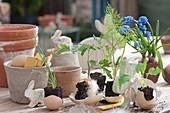 Gemüse- Jungpflanzen österlich in Eierschalen