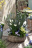 Terrassen-Arrangement mit Rosmarin und Frühlingsblühern im Korb