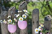 Gänseblümchen in Eierschalen an Zaun gehängt