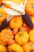 Small pumpkins, physalis pods and dark-red corn cobs