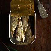 Sardinen in geöffneter Konservendose (Aufsicht)