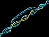 Gene editing complex, illustration