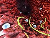 Intestinal bacterial flora, illustration