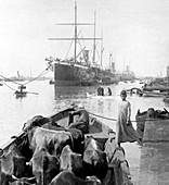 Suez Canal trade, Egypt, 1900s