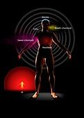 Body signals, illustration