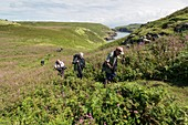 People walking on path on Skomer Island, Wales, UK