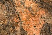 Granite gneiss, Danmark Island, Greenland