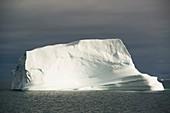 Very large icebergs in Scoresby Sund, Greenland