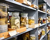 Preserved baby animals