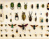 Preserved insects