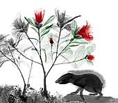Hedgehog and azaleas, X-ray