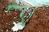 Thermokarst lakes and bays, Siberia, satellite image