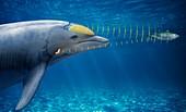 Dolphin echolocation, illustration
