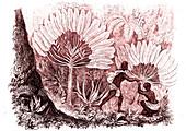 Madagascar natives harvesting Ravenala plants, illustration