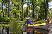 Environmental kayak tour of Louisiana swamp, USA