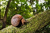 Snail on branch