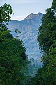 Imbak Canyon Conservation Area, Borneo