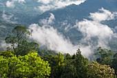 Mount Silam, Borneo