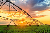 Automated irrigation system at sunset