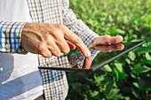Farmer using digital tablet