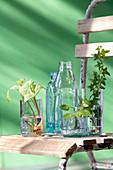 Flaschen und abgeschnittene Flaschenböden als Vasen