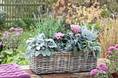 Herbst-Kasten mit silbergrauen Pflanzen
