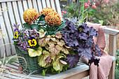 Herbst-Kasten mit Purpurglöckchen und Deko-Chrysantheme