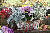 Herbst-Kasten mit Silberblatt, Chrysantheme und Salbei