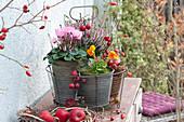 Herbst-Arrangement mit Alpenveilchen und Heide