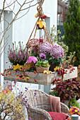 Hängendes Herbst-Arrangement mit Heide und Chrysanthemen