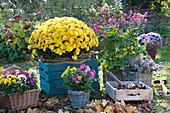 Herbst-Arrangement mit Chrysanthemen und Anemone