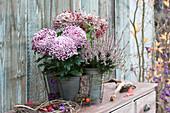 Deko-Chrysantheme 'Malabar' und Heide 'Rosita'