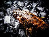 Eine frische Quappe auf Eis