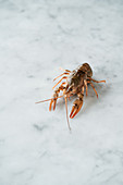 A fresh water lobster on a marble surface
