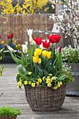 Korb mit Tulpen und Primeln