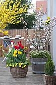 Frühlings-Terrasse mit Tulpen und Zierkirsche