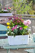 Kleiner Kasten mit Frühlingsblumen