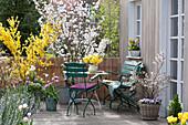 Frühlingsterrasse mit Zierkirsche und Goldglöckchen