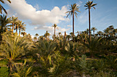 Orihuela Palm Garden, Spain